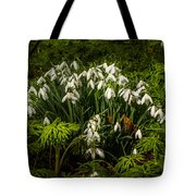 Snowdrop Woods Tote Bag