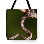 Spotted Python Antaresia Maculosa Tote Bag