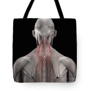 The Muscles Of The Back Tote Bag