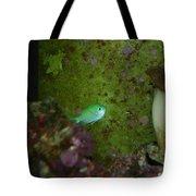 Tropical Fish And Coral Tote Bag