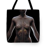 Urinary System Female Tote Bag