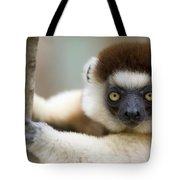 Verreauxs Sifaka In Berenty Tote Bag