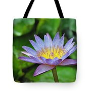 Water Lily 13 Tote Bag