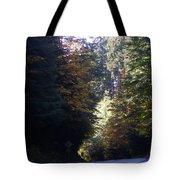 Autumn 4 Tote Bag