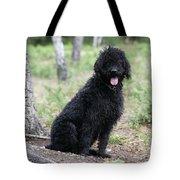 Black Labradoodle Tote Bag