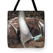Blue-footed Booby Courtship Dance Tote Bag
