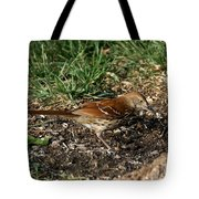 Brown Thrasher Tote Bag