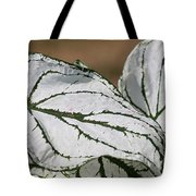 Caladium Named White Christmas Tote Bag