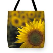 Close-up Of Sunflowers In A Field Tote Bag