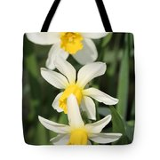 Cyclamineus Daffodil Named Jack Snipe Tote Bag