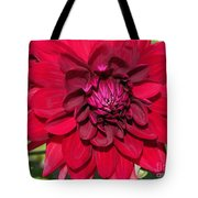 Dahlia Named Nuit D'ete Tote Bag