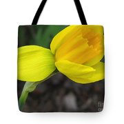 Dwarf Cyclamineus Daffodil Named Jet Fire Tote Bag