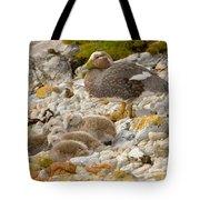 Falkland Steamerduck Tote Bag