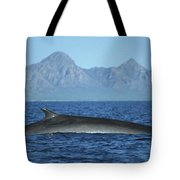 Fin Whale In Sea Of Cortez Tote Bag