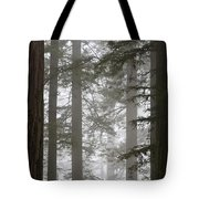 Foggy Coast Redwood Forest Tote Bag