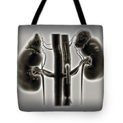 Kidneys And Adrenal Glands Tote Bag