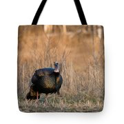Male Eastern Wild Turkey Tote Bag