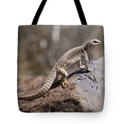 Mojave Desert Iguana Tote Bag