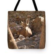 Nubian Ibex Tote Bag