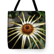 Osteospermum Named African Moon Tote Bag