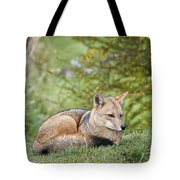 Patagonian Red Fox Tote Bag