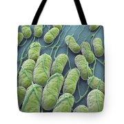 Salmonella Bacteria Tote Bag