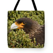Striated Caracara Tote Bag