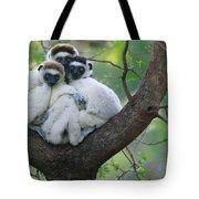Verreauxs Sifakas Cuddling Tote Bag