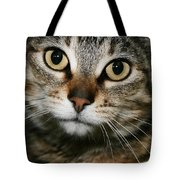Brown Tabby Tote Bag