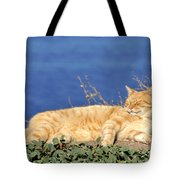 Cat In Hydra Island Tote Bag