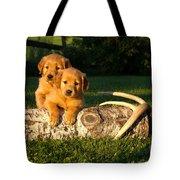 Golden Retriever Puppies Tote Bag