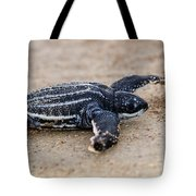Leatherback Sea Turtle Hatchling Amelia Island Florida Tote Bag