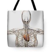 Medical Illustration Of Female Tote Bag