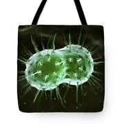 Neisseria Gonorrhoeae Bacteria Tote Bag