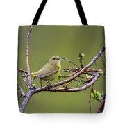 Orangecrowned Warbler Tote Bag