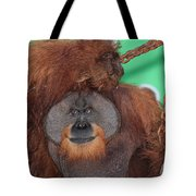 Portrait Of A Large Male Orangutan Tote Bag