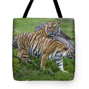 Siberian Tigers, China Tote Bag