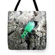 6 Spotted Tiger Beetle Tote Bag