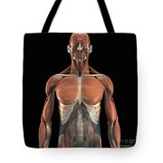 The Psoas Muscles Tote Bag