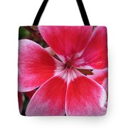 Zonal Geranium Named Candy Fantasy Kiss Tote Bag