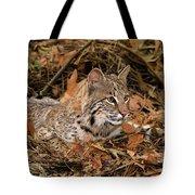 611000006 Bobcat Felis Rufus Wildlife Rescue Tote Bag