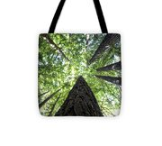 642 Pr A Stand  Of Trees Tote Bag