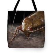 Bedbug Cimex Lectularius Tote Bag
