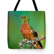 Chestnut-breasted Coronet Tote Bag