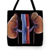 Kidneys And Adrenal Glands Tote Bag