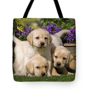 Yellow Labrador Puppies Tote Bag