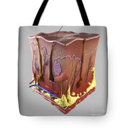 Anatomy Of Human Skin Tote Bag