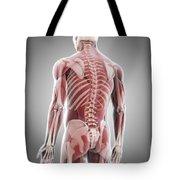 Human Muscles Tote Bag