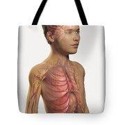 Internal Anatomy Pre-adolescent Tote Bag