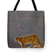 Mountain Lions In The Western Mountains Tote Bag